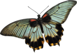 mzimm_daydreamer_addon_butterfly.png