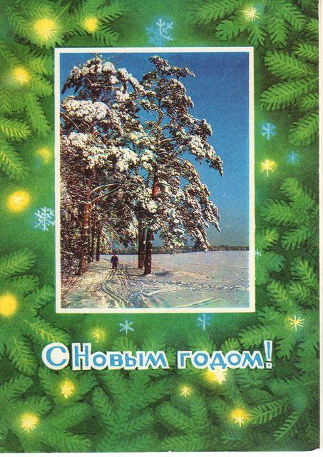 Сосны в снегу. С Новым годом!