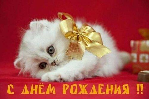 Открытки и поздравления с днём рождения с котами