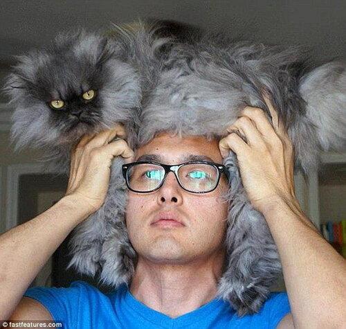 шапка из кошки
