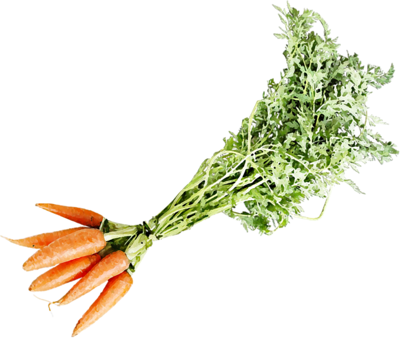 catherinedesigns_LittleGarden_carrots1.png