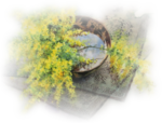 yuko Nagayama mimosa-colorel.png
