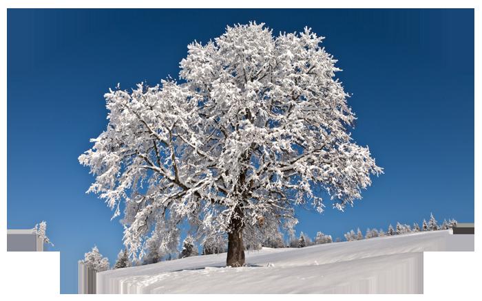 """Картинки по запросу """"гифы тихо падает снег"""""""