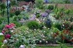 Цветение роз 2015