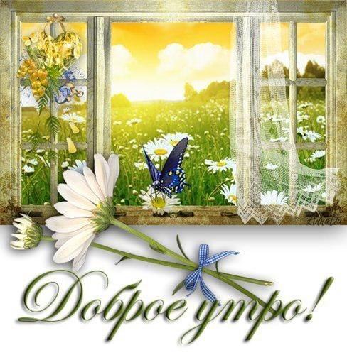Доброе утро! За окном ромашковое поле