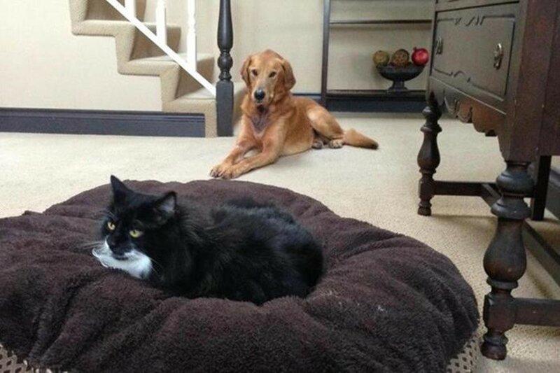 Что делает собака, если кошка занимает ее место
