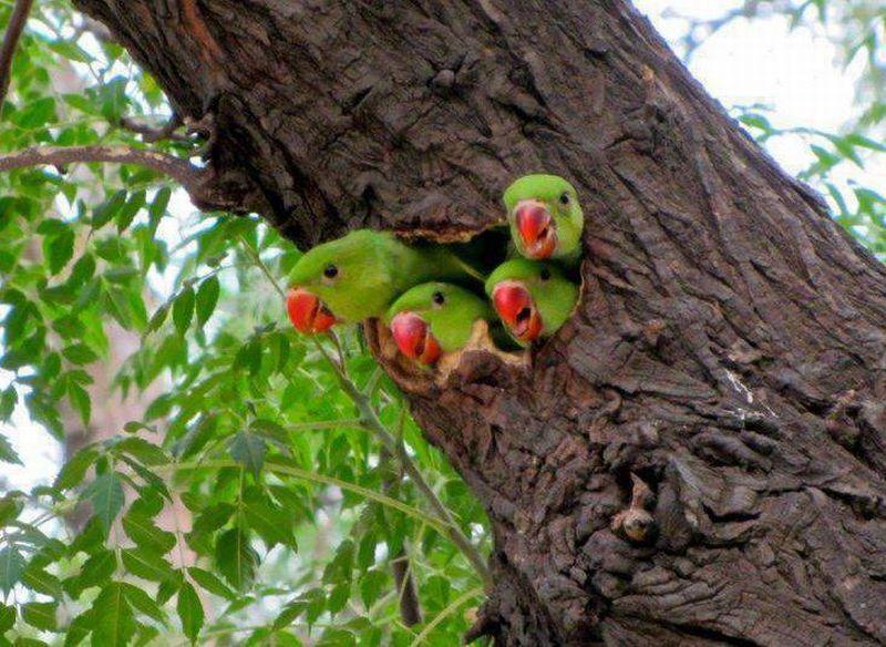гнездо попугая картинки очень редко