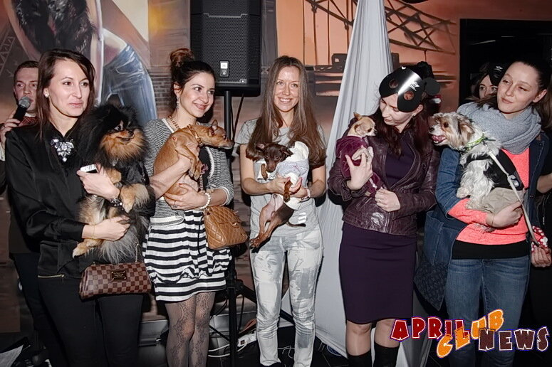 «MINI Dog Party»