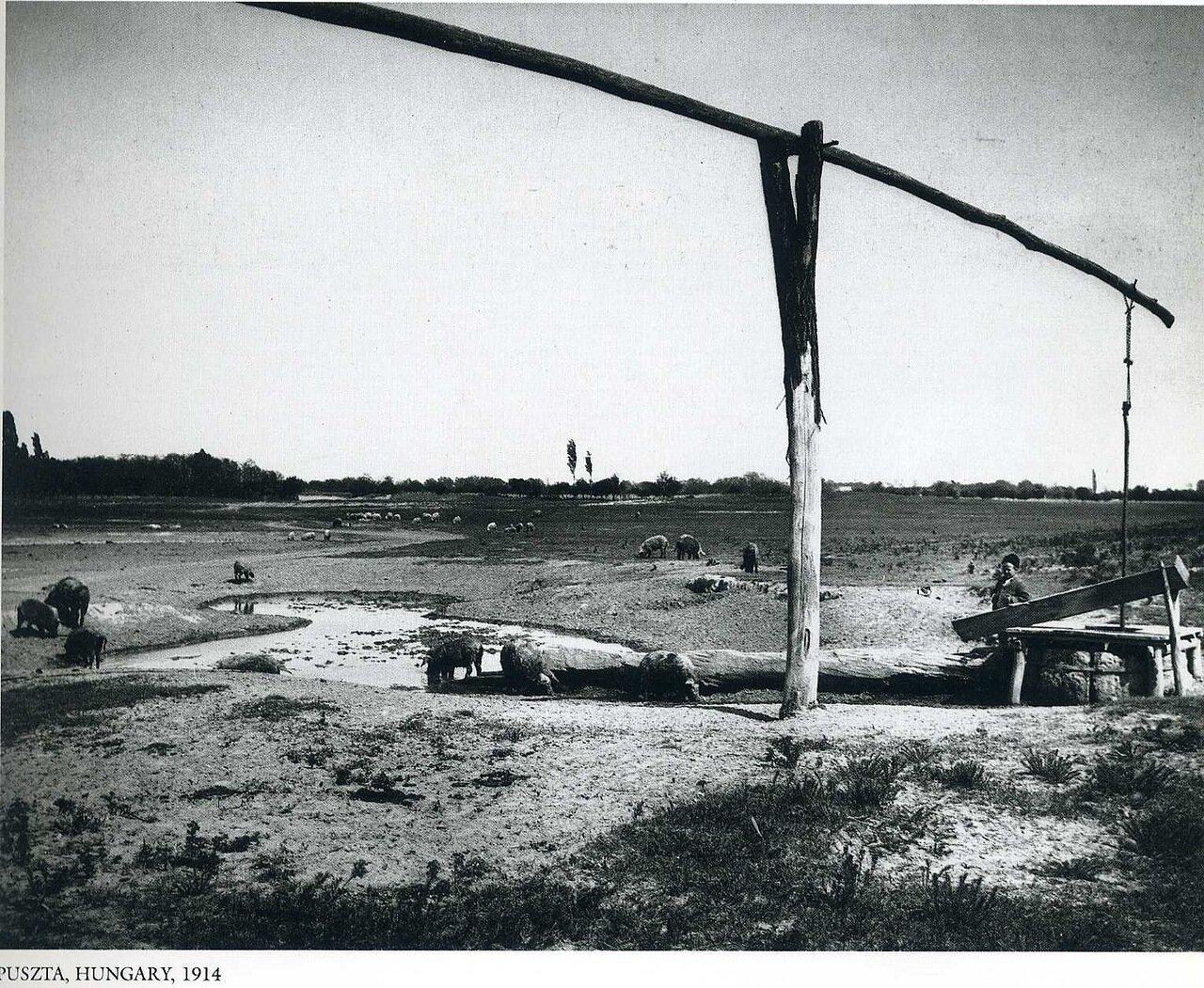 Пуста, Венгрия. 1914