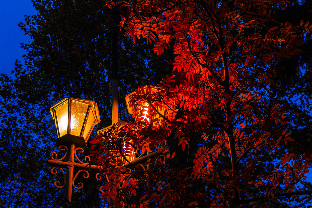 Осенний наряд рябины