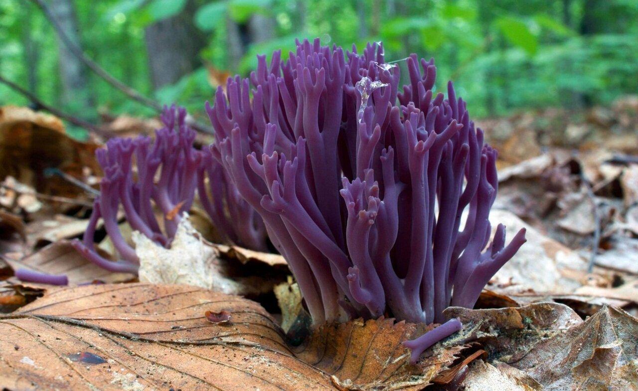 Это не водоросли - это грибы !