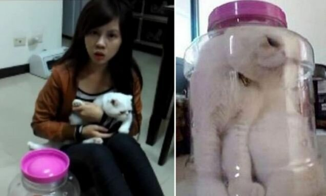 Девушка жестоко наказывает своего кота (2 фото + видео)