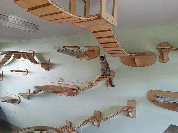Кошкин дом (10 фото)