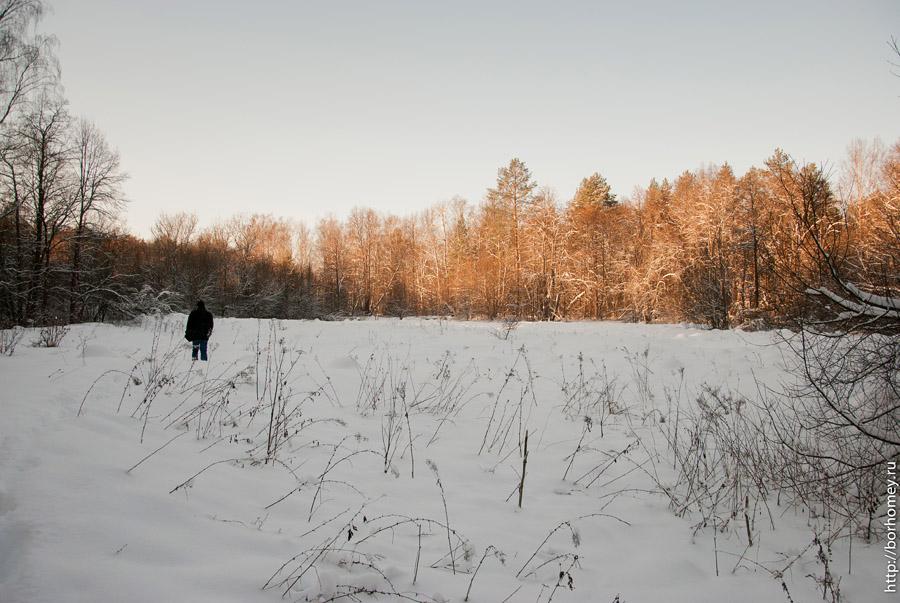 снежная поляна в лесу