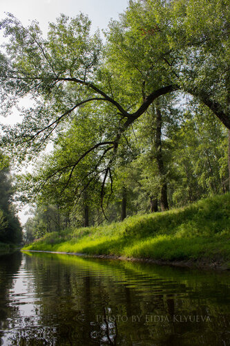 Нависшее над водой дерево