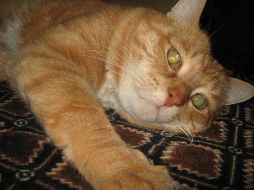 А у меня живет кошка... - Страница 2 0_da1eb_c91083f5_L
