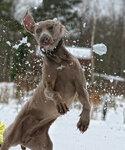 Самый энергичный пес