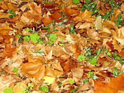 Листья желтые над городом кружатся,С тихим шорохом нам под ноги ложатся