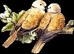 http://img-fotki.yandex.ru/get/9836/97761520.1d/0_7d615_b63fd4b0_orig.png