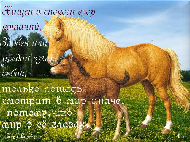 Стих к подарку лошадка 95