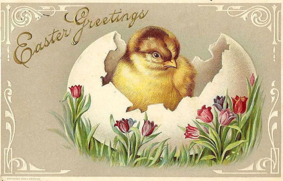 Пасха цыплята открытка