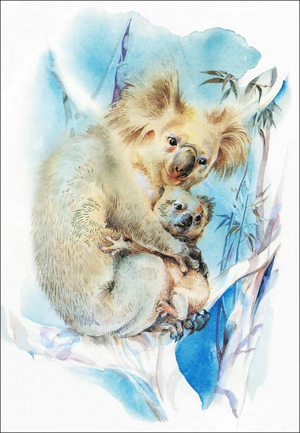 Е. Флерова, Про коалу Ушастика