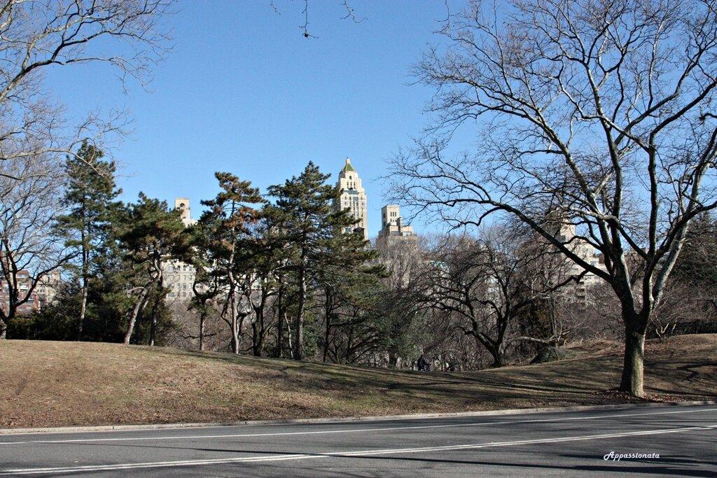 Центральный парк Нью Йорк