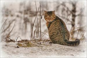 Монастырская кошка