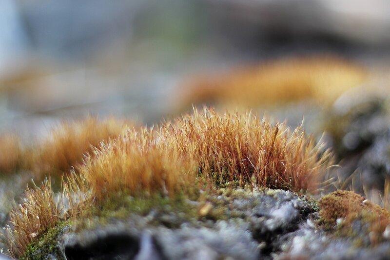Островок мха на старой деревяшке, похожий на заросший травой каменистый остров где-то в Карелии