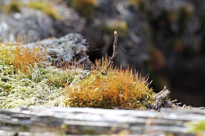 Островок мха на старой деревяшке, похожий на заросший травой каменистый остров с чахлыми деревцами где-то в Карелии