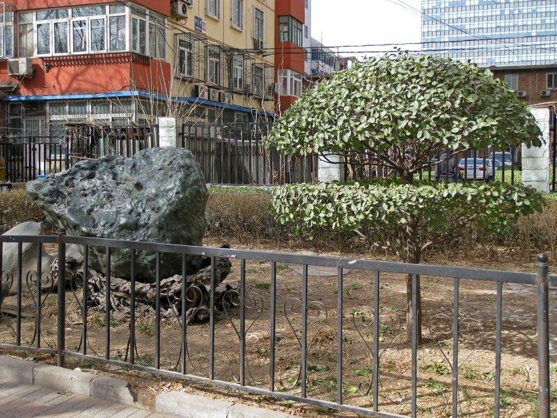 Камень и карликовое дерево в палисаднике у дома, Пекин