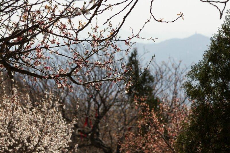 Весна в горах, парк Сяншань, Пекин