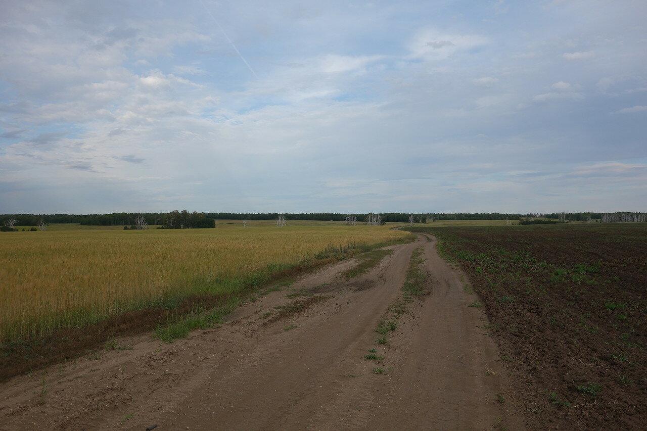 то степь, то поле, то леса