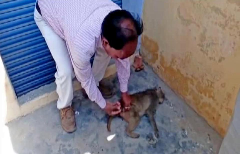 Неизвестная болезнь убила более 100 обезьян в индийской деревне