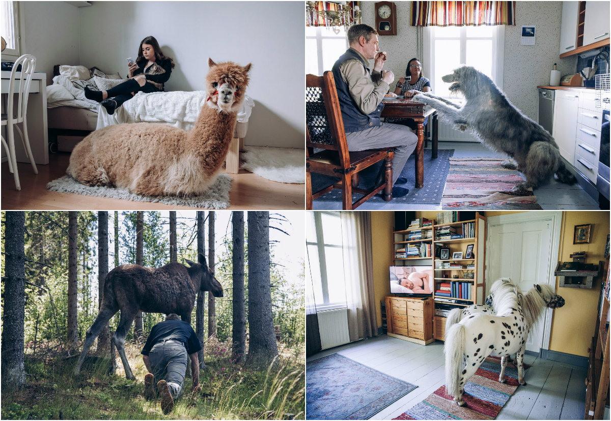 Собратья: особые отношения финнов с животными