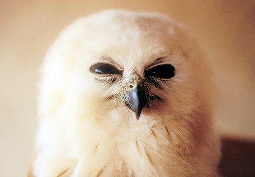 owls20.jpg