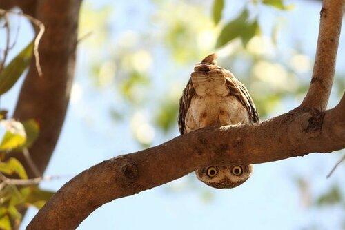 owls09.jpg