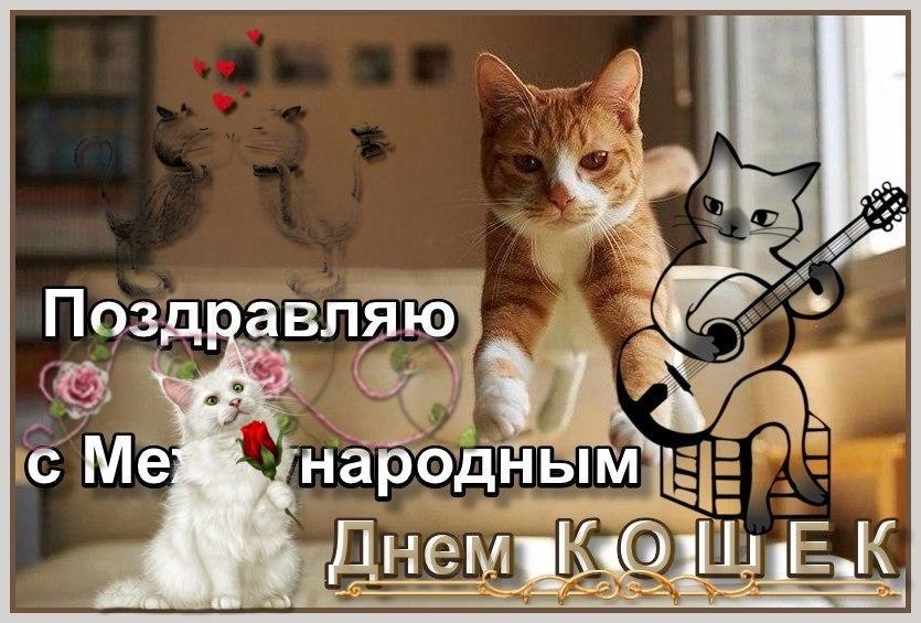 я-праздник-кошек-3 ИN.jpg