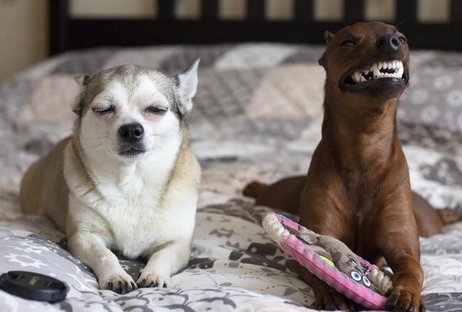 фотографии животных домашние питомцы Фотография животные фотограф питомцы 127 часов звери