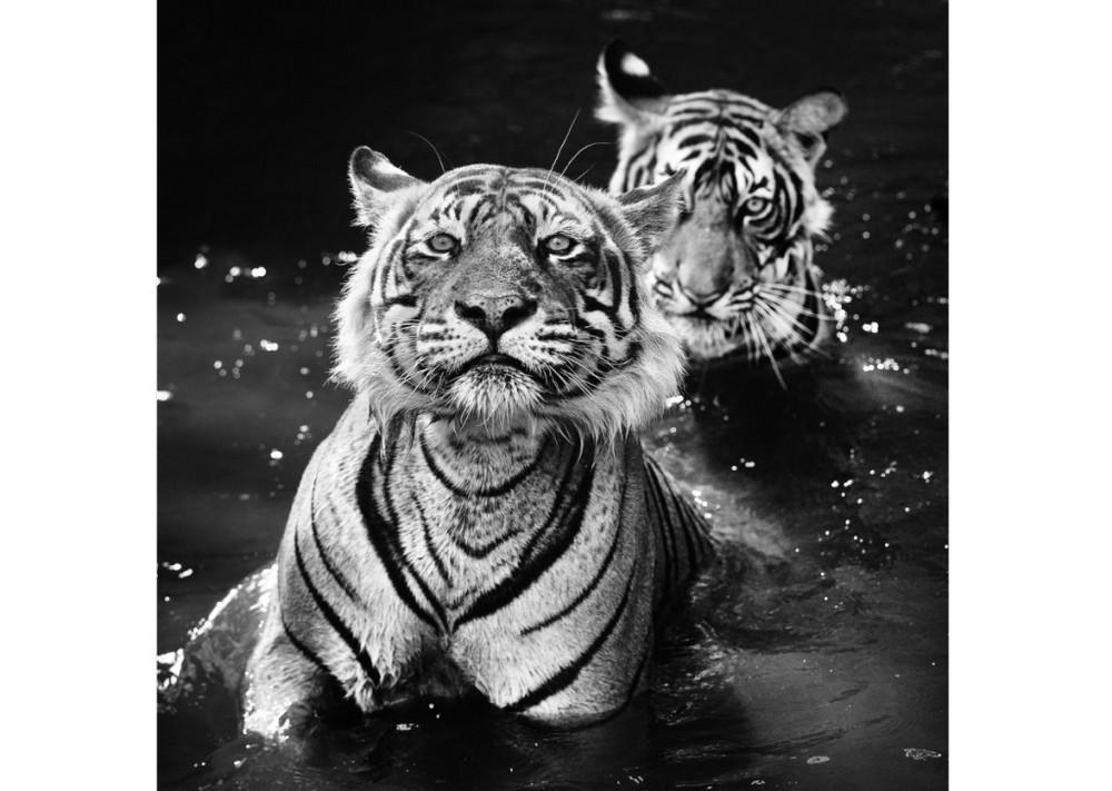 животные редкие животные Новый год Фотография фотограф самые дикий встреча
