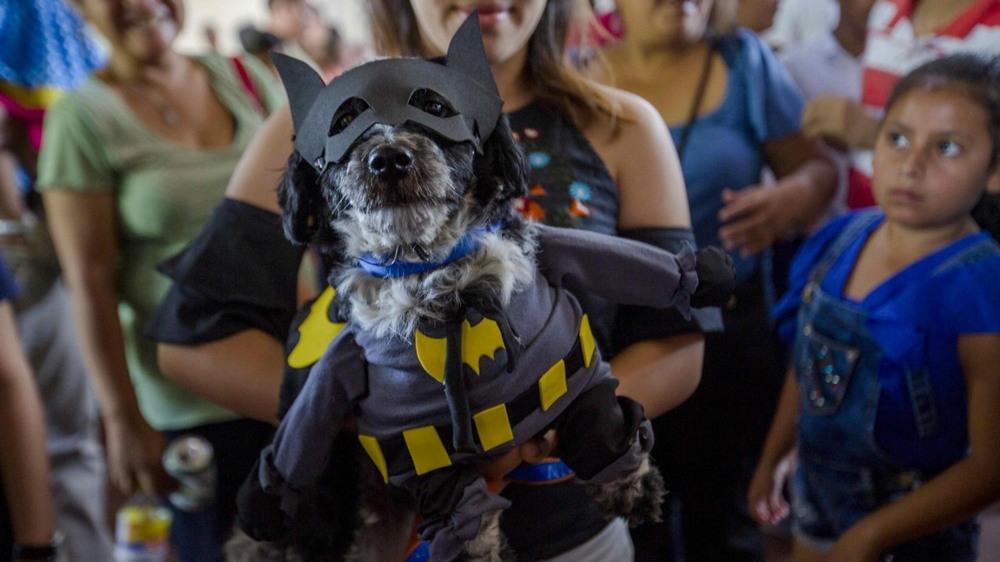 Хозяева молятся за здоровье собак в Никарагуа