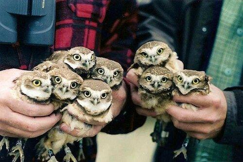 owls01.jpg