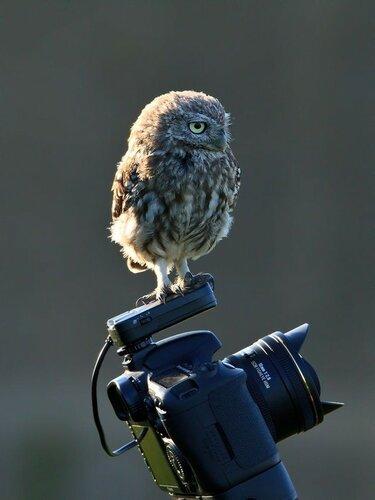 owls08.jpg