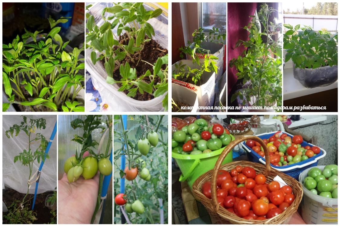 Как вырастить помидоры, самый простой способ – продолжение