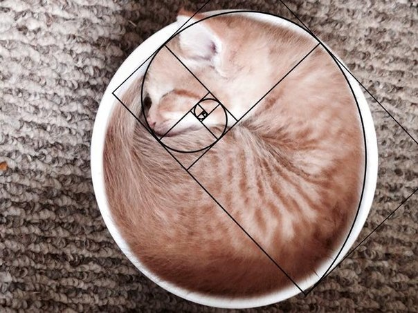Вот почему все любят котов (9 фото)