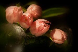 Тюльпаны - символ марта
