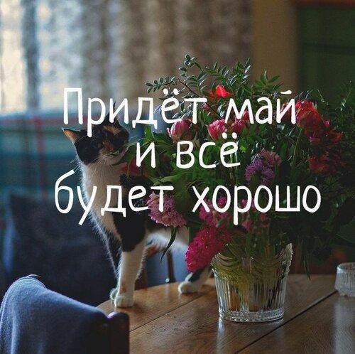 https://img-fotki.yandex.ru/get/986125/27263553.1a/0_ed76f_592eda86_L.jpg
