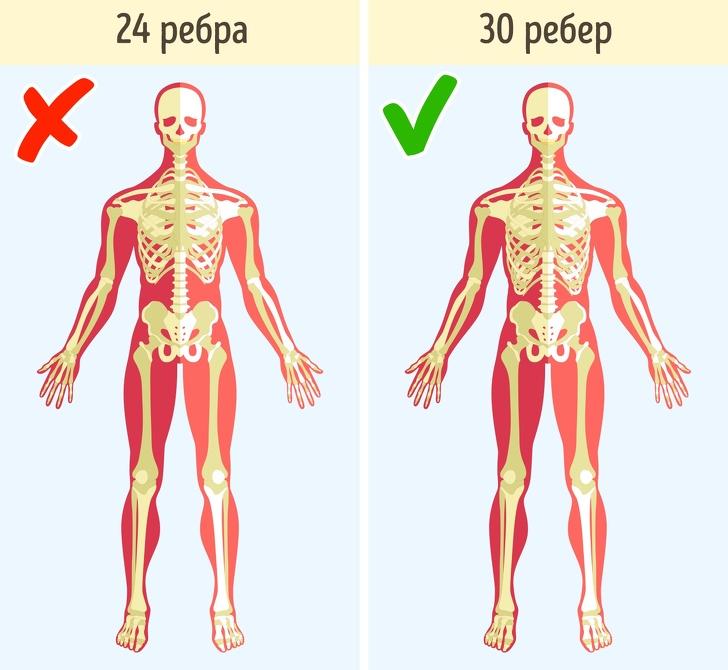 тела тело исследование человек исследования как устроено антропология самые