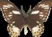 бабочки 5 (50).png