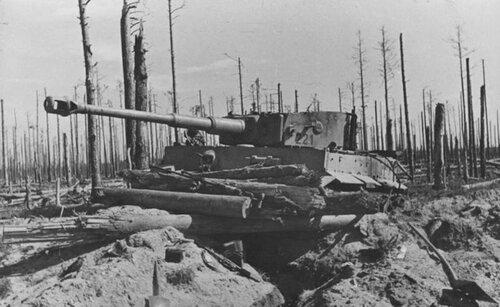 Танк Pz.Kpfw.VI Tiger Ausf.H1 с №221 из 502-го ттб подбитый в р-не Арбузово. Ленинградская обл., 1944 год.